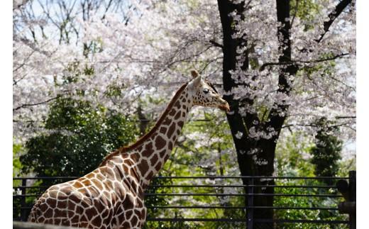 羽村市動物公園年間ファミリーパスポート&寄附者銘板にお名前を掲示