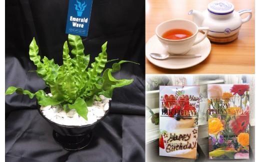 (1281)エメラルドウェーブ&紅茶セット