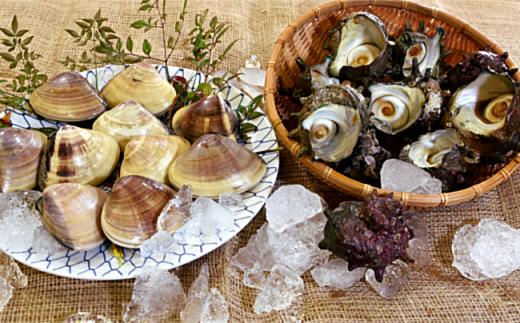 3-31 いずみや鮮魚店の活きサザエ・蛤(はまぐり) 貝づくしセット