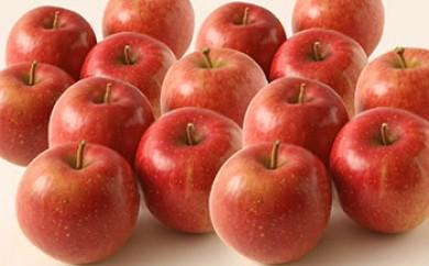 シャリシャリ感がたまらないフジ林檎×2箱(さとう果樹園)