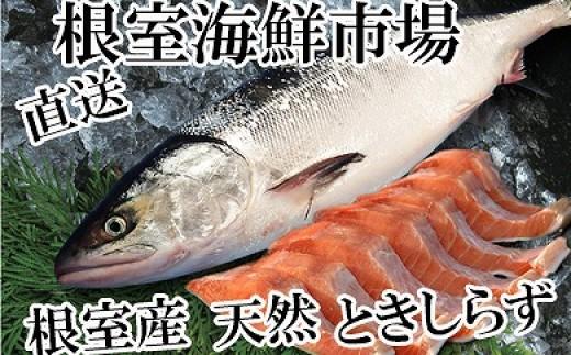 CA-14095 【北海道根室産】根室海鮮市場<直送>ときしらず半身切身