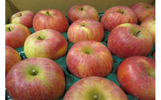 0075-109 りんご(葉とらずサンふじ)5.5kg ご家庭用