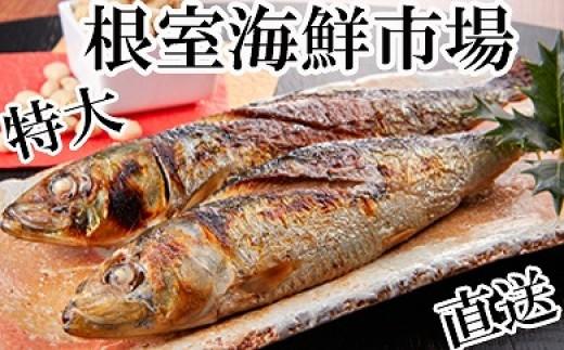 CA-14092 根室海鮮市場<直送>北海道産一汐いわし30尾