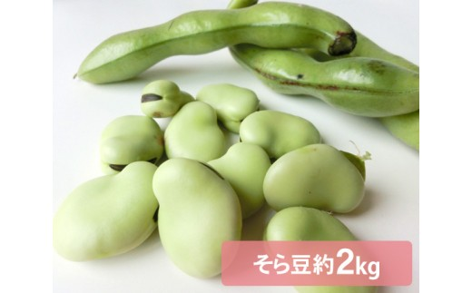 No.103 文ちゃん農園の そら豆 約2kg