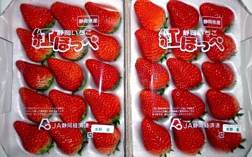 91 掛川産いちご「紅ほっぺ」500g×2 水野農園