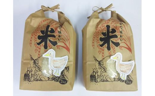 A-246 有機栽培米(あいがも農法) こしひかり 2Kgx2袋【1pt】