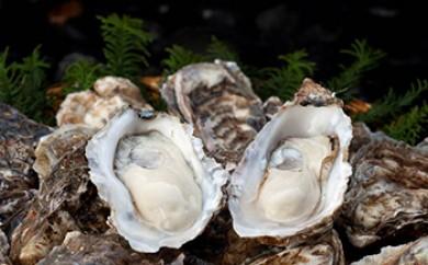 「厚岸で1番小さいのにスペシャルな牡蠣15個」