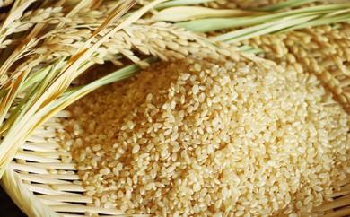 [№5862-0648]健康ヘルシーな玄米!特Aはるみ30kg