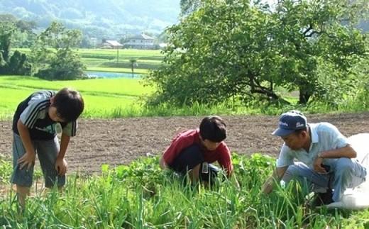 5-35 農家民泊&農業体験(ペア)