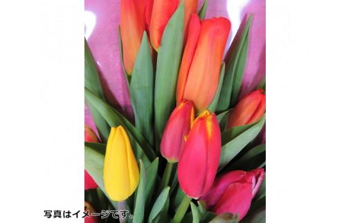 No.176 チューリップの花束 計18本