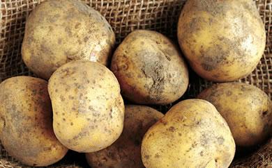 エコファーマー認定農場  「恵みや」 じゃがいも「キタアカリ」約5kg