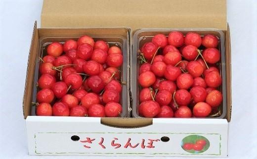 0069-102 さくらんぼ(佐藤錦)1kg バラ詰め