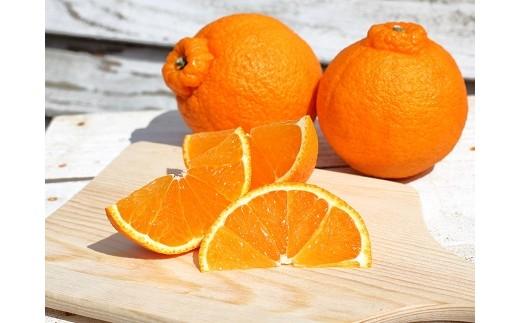 【追加数量限定】デコがプリッとかわいい不知火オレンジ 5kg