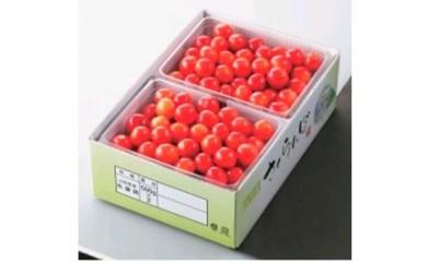 A041 さくらんぼ佐藤錦バラ詰 1kg