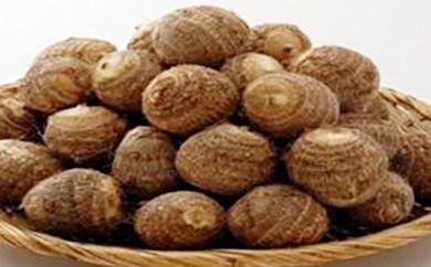 [№5884-0184]大野在来種として先祖から受け継ぐ 「越前里芋」 5kg