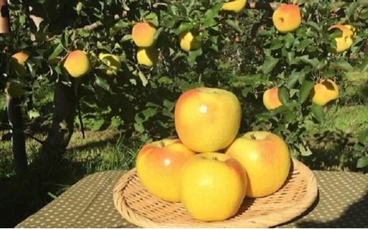 [№5886-0095]りんご(ぐんま名月) 約5kg