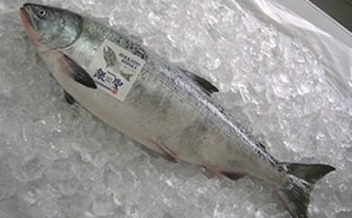 [№4630-0611]日高産銀聖鮭【生】3.5㎏以上(オス)