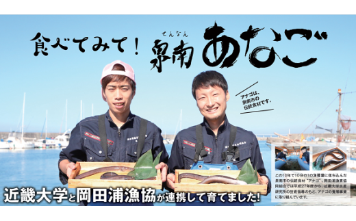 D-077 近畿大学✖岡田浦漁協『泉南あなご』4尾入り!
