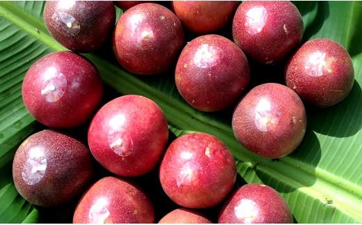 農薬・化学肥料不使用沖縄産「パッションフルーツ」
