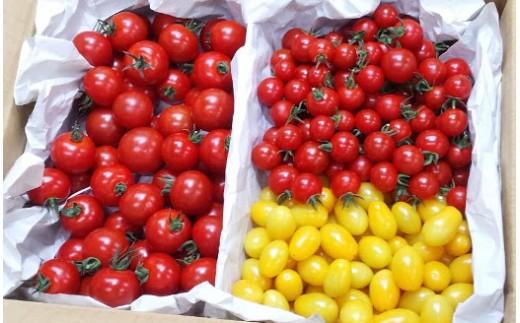 2-9-23 フルーツトマト「太陽のめぐみ」2kg