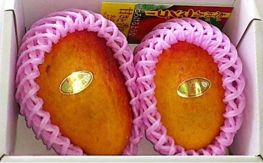 [№5838-0077]とろけるような甘さと芳醇な香りの恵比寿マンゴー