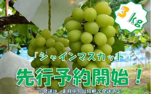 中村葡萄園の旬の葡萄 シャインマスカット 3kg箱
