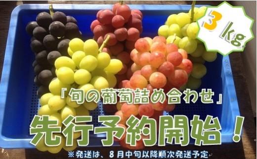 中村葡萄園の旬の葡萄詰め合わせ 3kg箱