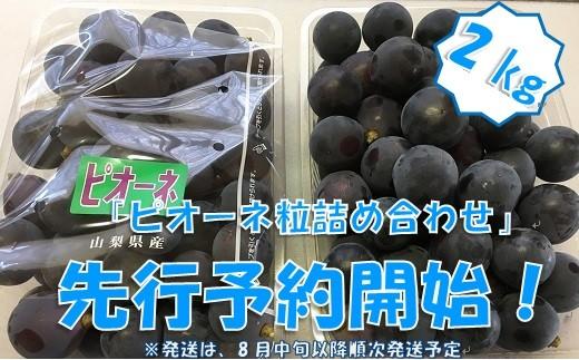 中村葡萄園の旬の葡萄粒 ピオーネ2kg箱