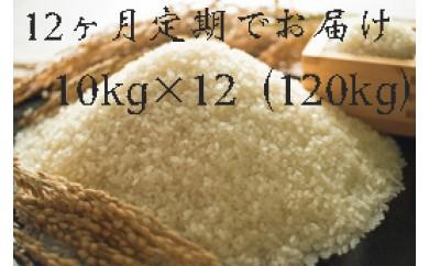 【頒布会】福岡県産ヒノヒカリ(2017年秋収穫のお米)10キロ×12回 定期コース(全12回のお届け)
