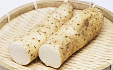[№5656-0377]自然薯(梅)600g<エコ・ファーム楽々園>