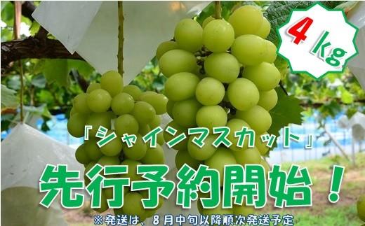 中村葡萄園の旬の葡萄 シャインマスカット 4kg箱