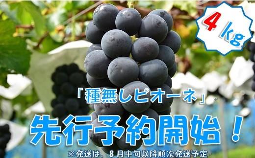 中村葡萄園の旬の葡萄 種無しピオーネ 4kg箱
