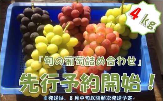 中村葡萄園の旬の葡萄詰め合わせ 4kg箱