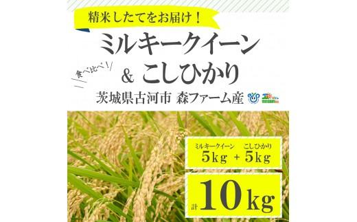 BI01_【新米】食べ比べ!低農薬米こしひかりとミルキークイーン計10kg【お中元・お歳暮にも!】