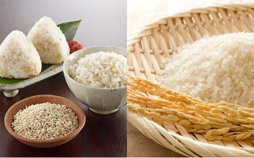 [№5895-0111]【お徳用】もち麦ごはん…トペコのもち麦、あきろまん食べきり11kg