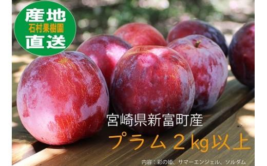 A-100 石村果樹園のプラム詰合せ 2kg以上【2,500pt】