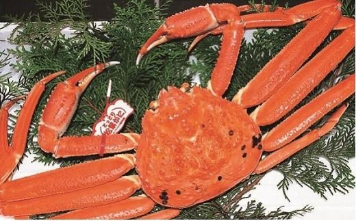 「松葉ガニ漁獲量日本一のまち岩美町」からお届け!山陰の冬の味覚の王様、松葉ガニ。 新鮮なカニをボイルしてお届けします。