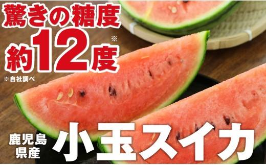 A1-2267/甘さ抜群の小玉スイカ 2玉!