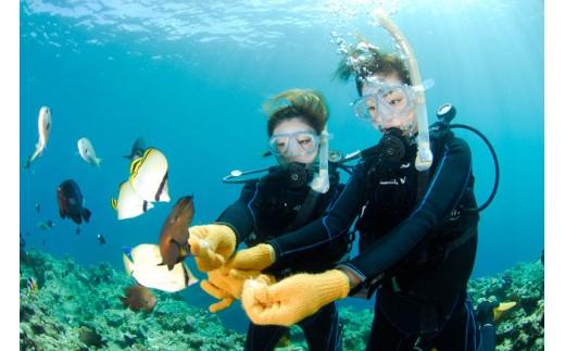 青の洞窟体験ダイビング+熱帯魚 餌付け体験ダイビング(ペア)