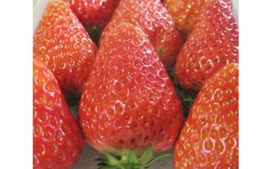 [№5789-0363]岡崎駒立常果園産いちご(夢の香)4パック約1kg