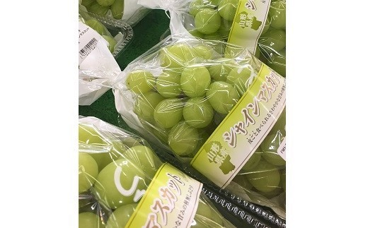 0017-116 ぶどう(シャインマスカット)1.3kg(2房)