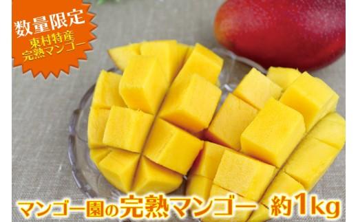 東村特産マンゴー園の完熟マンゴー約1kg(2~3玉)【2018年発送】