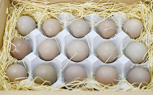 564 国鳥!日本キジ有精卵(生卵)15個