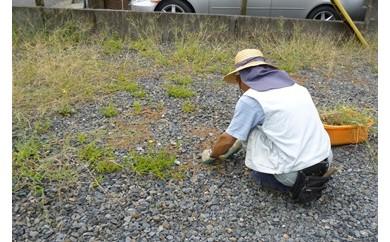 宅地の草取り・清掃作業(2名3時間相当)