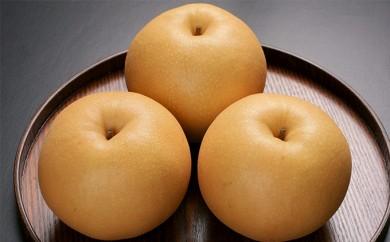 [№5800-0132]蔵王の新高梨約5kg 果物農家こだわりの特大玉(4~5L)