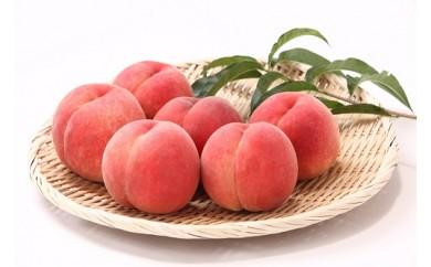 AP38 数量限定!どちらも食べたい「白桃と黄桃の食べ比べセット 5k」