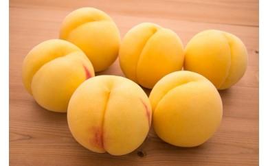AP37 甘みと酸味の絶妙なバランス 「黄桃(有袋・無袋) 5Kg」