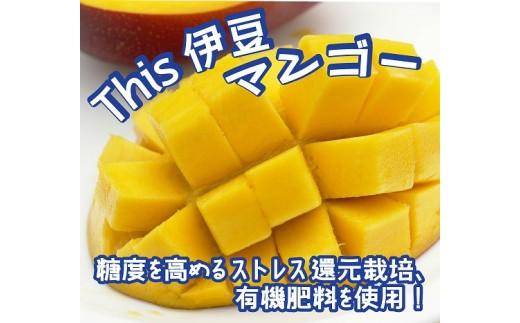 020-007 This 伊豆 マンゴー