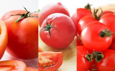 [№5730-0229]【地域限定発送】角田市産トマト3kg詰合せ