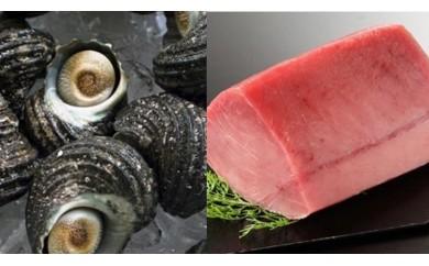 大分県産 天然活サザエ約1Kg&国産天然マグロの赤身約 1Kgセット 急速冷凍して水揚げ直後の新鮮なままお届けします